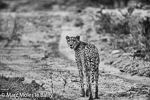 Marc Moles le Bailly - Photography album from Africa